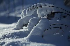 Snö_1493_hemsida_trädgård