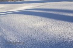 Skuggspel i snön