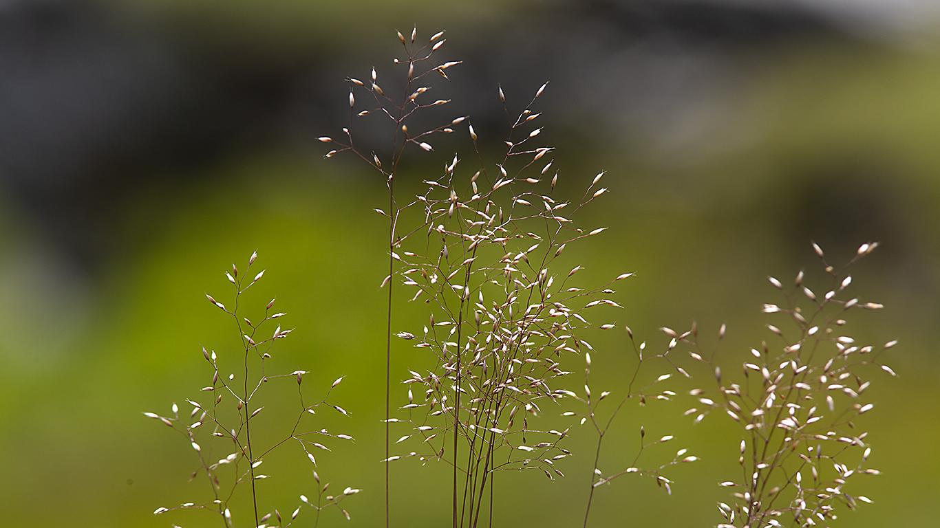 190804_5985_gräs