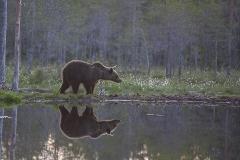 Björnspegling_0143