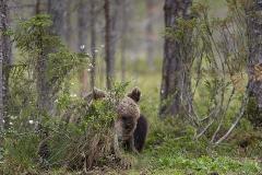 björn9771