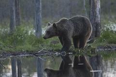Björnspegel_0336