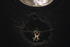 Spindelitaket_6120