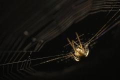 Spindelitaket_6148