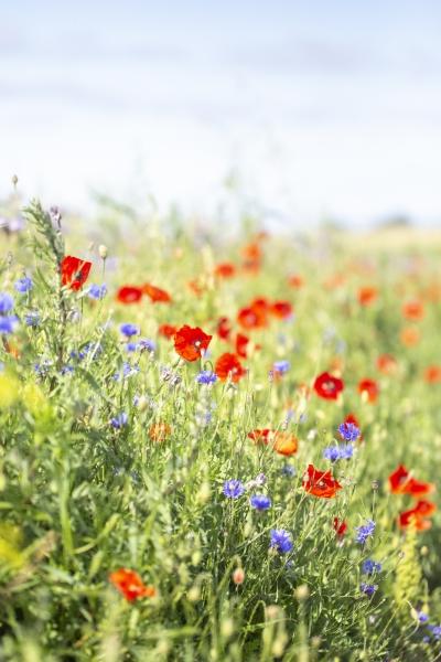 Blommande-vagkant